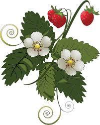 fraisier.jfif