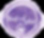 logo-FL-compressor.png