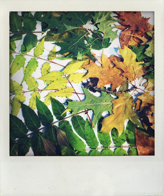 Embracing Autumn: Andy Goldsworthy