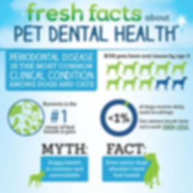 indigo_pet_dental_infographic_thumbnail.