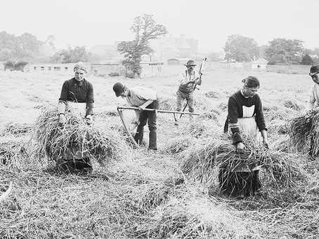 1881: Pioneering agriculture at Whiteman's Green