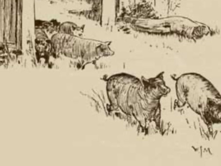 19th century: Pig's life and poaching
