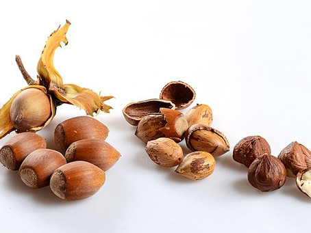 Hazelnuts at Christmas in Cuckfield