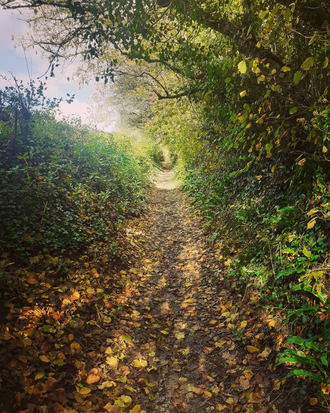 1 hour counselling walk