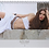 Thumbnail: Sold Out- Ruth Diaz Calendar 2015