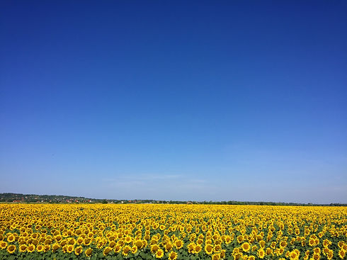 agriculture-blooming-blossom-blue-sky-54