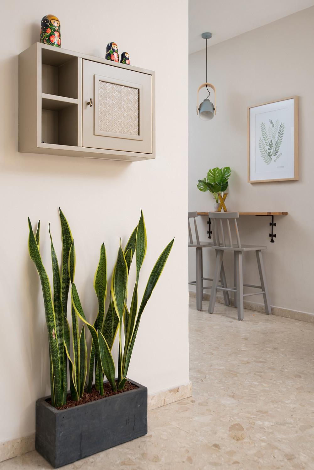 צמח עמיד ומשגע בחלל הבית