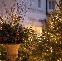 Courtyard-Christmas-trees-2-1024x683-192