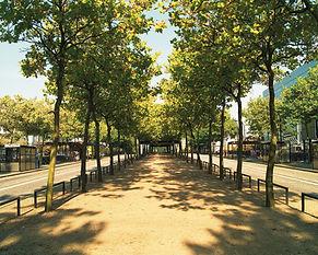 63Large_Midsummer_Boulevard.jpg