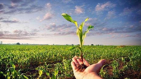 corso per il rinnovo del patentno fitosanitario