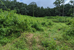 Overgrown Vegetation Clearing Quote