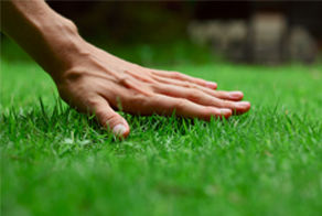 Total Lawn/Yard Care Quote
