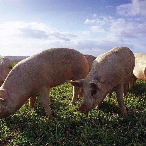 Pork Boxes - for 2