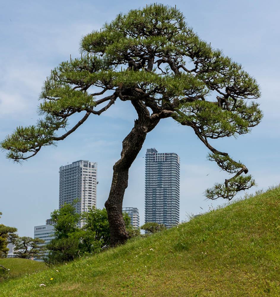 jardin - Tokyo