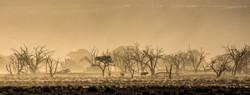 Oryx dans le vent de sable