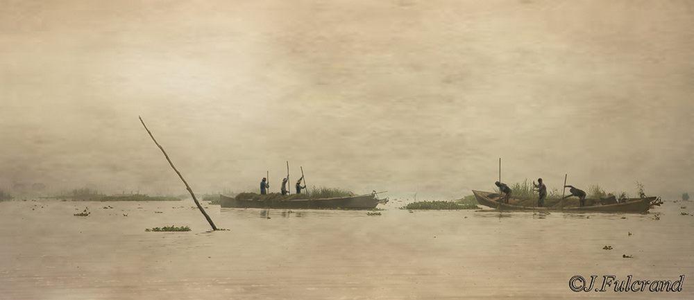 pêcheurs d'algues