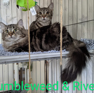Bonded - Tumbleweed & River