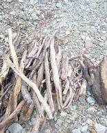 場内には落ち枝がたくさん