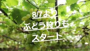 2021.8.22更新[果物狩り体験終了のご案内]ブルーベリー・ブドウ狩り終了となります。