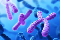 cell-karyotype-exhibiting-trisomy_369604