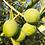 Thumbnail: Huile d'olive vierge extra, biologique