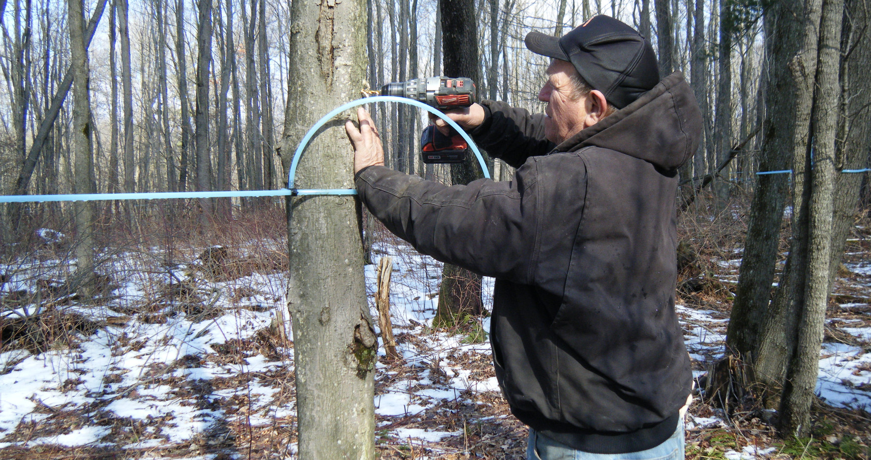 Dick Brant tapping maple tree