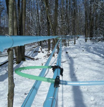 Plastic Tubing in Sugar Woods