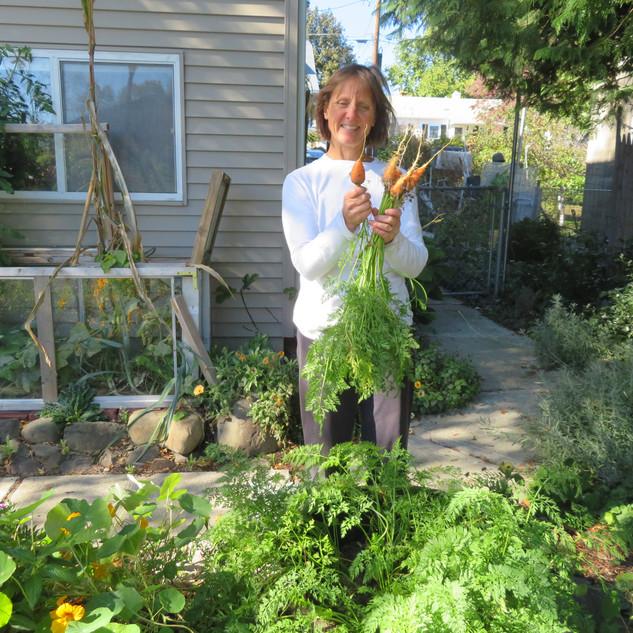 Harvesting carrots 4.jpg