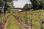 Vineyard tour, vineyard bicycle tour, nj vineyards