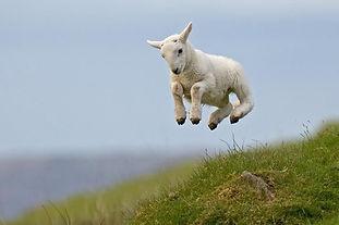 Lamb representing healing through God