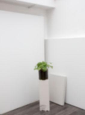 showroom white line