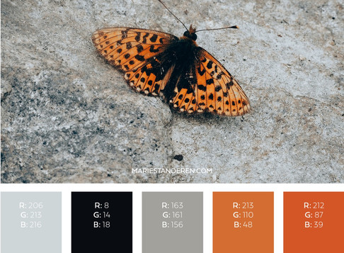 COLOR INSPO: MONARCH