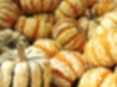 pumpkin-441203_960_720.jpg