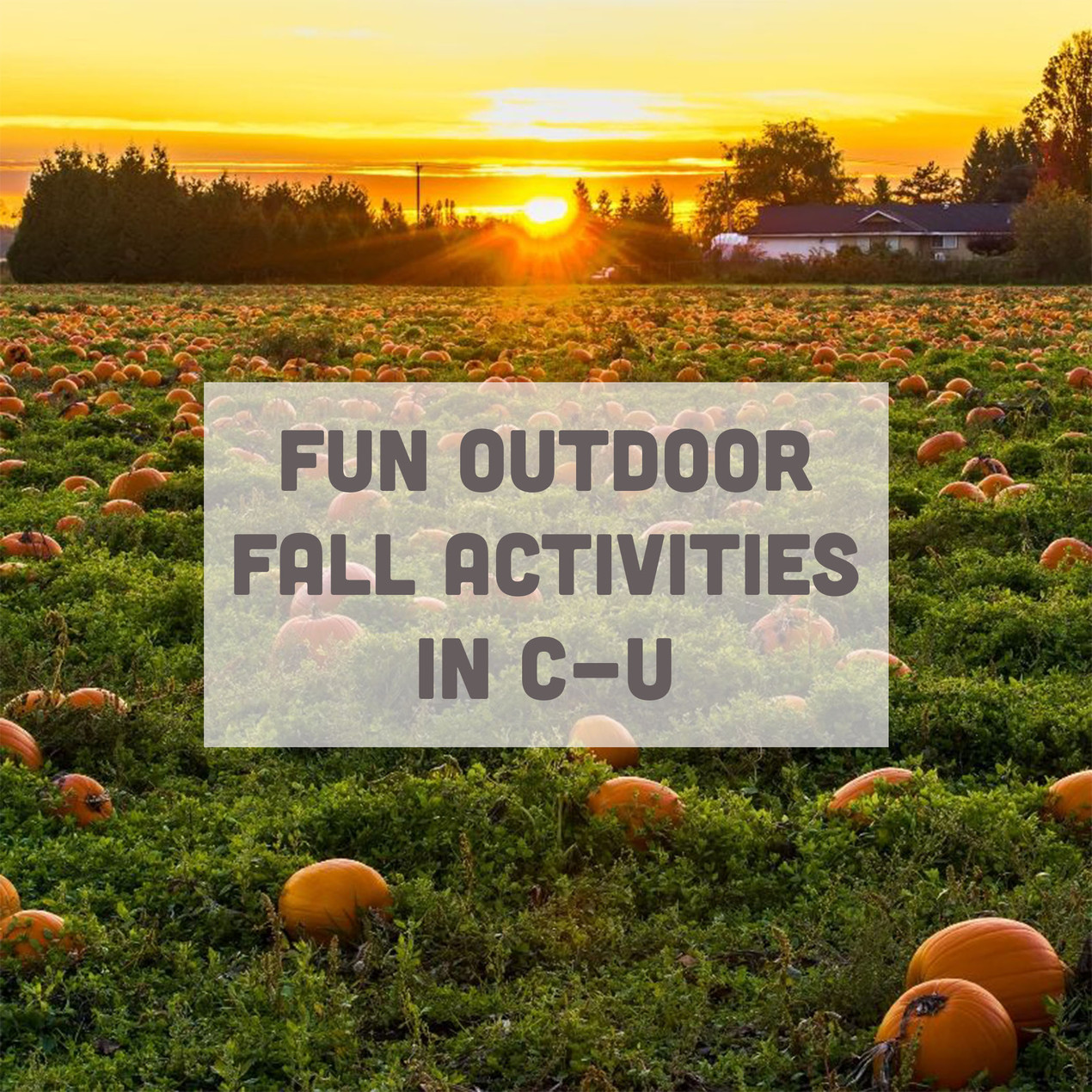 Fun Outdoor Fall Activities in C-U