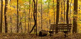 Busey-Woods-1.jpg