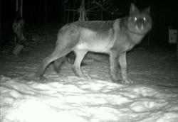 Wildlife at Clarke Lake 2
