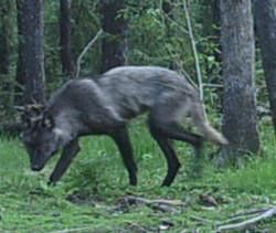 Wildlife at Clarke Lake 1