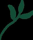 Matcha Leaf Illustration (1).png
