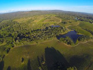Penn Valley Vineyards