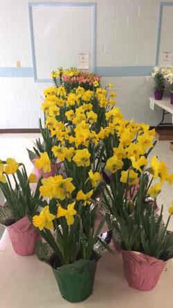 2017 flower sale 2