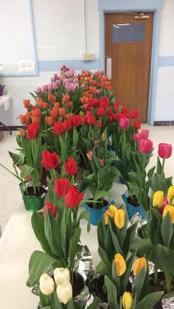 2017 flower sale 4