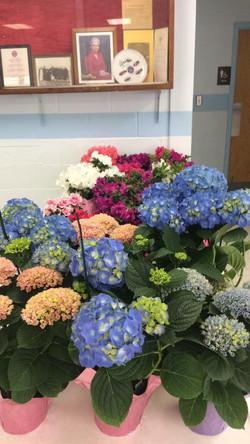 2017 flower sale 6
