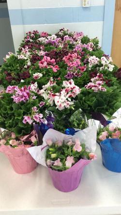 2017 flower sale 5