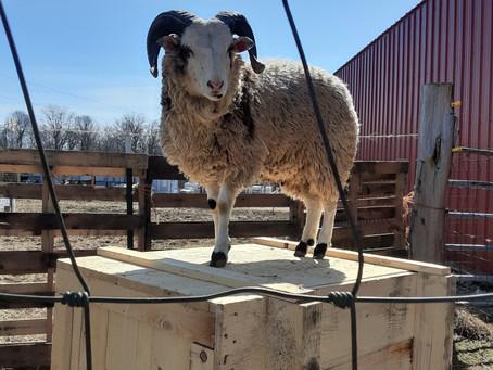 Welcome Morgan Farms Eli!