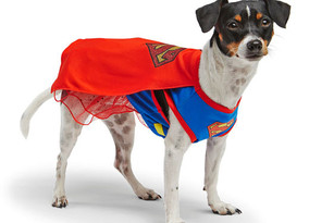 Thorold costume parade going to the dogs