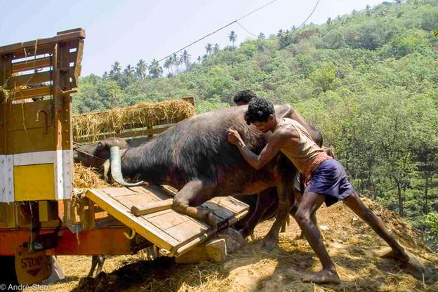 Cattle Market. Kerala, India. 2008.