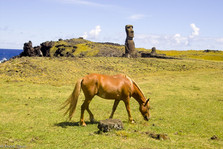 The horse and the Moai