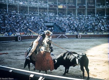 picing-bull.jpg