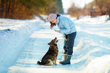 LOVE YOUR PET - TRAINING IN SNOW - shutt