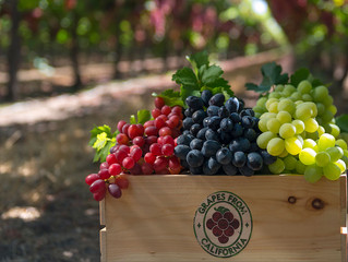 A grape constituent protects against cancer